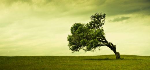Árvore enraizada ao vento